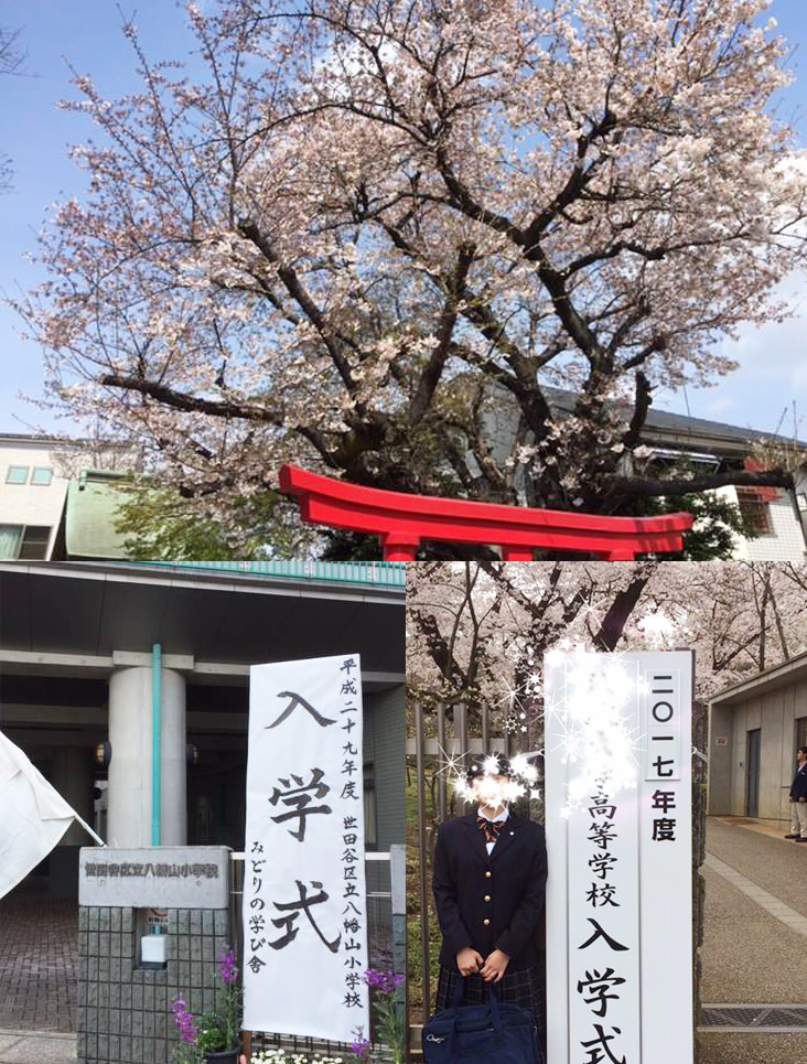 世田谷区立小学校・中学校入学式